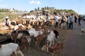 Sheep market